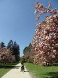 Parc de Sceaux (2)