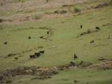 2. Dartmoor National Park (8)