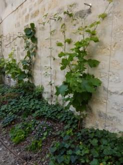 2.Jardin des Rosiers (19)