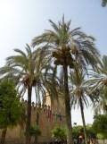Alcázar de los Reyes Cristianos (1)