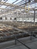 Centre Horticole de Paris (120)