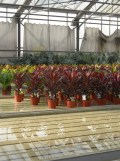 Centre Horticole de Paris (21)