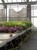 Centre Horticole de Paris (22)