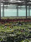 Centre Horticole de Paris (55)