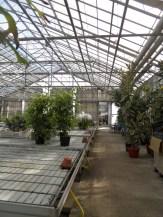 Centre Horticole de Paris (6)