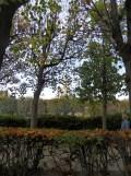 Musée Rodin (24)