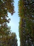 Parc de Sceaux (28)