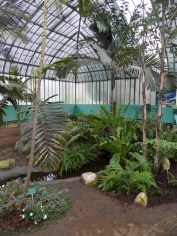 Jardin des serres d'Auteuil (55)