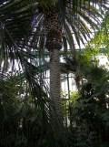 Jardin des serres d'Auteuil (85)