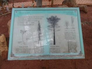 Jardin des serres d'Auteuil (41)