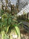 Jardin des Plantes - Nantes et retour (16)