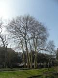 Jardin des Plantes - Nantes et retour (51)