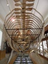 Musée d'histoire naturelle de Nantes (105)