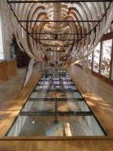 Musée d'histoire naturelle de Nantes (106)