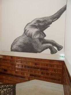 Musée d'histoire naturelle de Nantes (112)