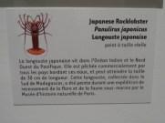Musée d'histoire naturelle de Nantes (54)