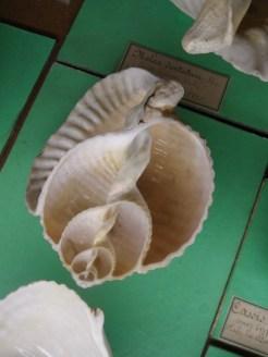 Musée d'histoire naturelle de Nantes (64)
