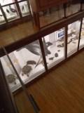 Musée d'histoire naturelle de Nantes (75)