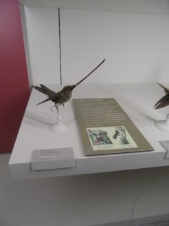 Musée d'histoire naturelle de Nantes (82)