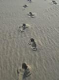 Dune de Pyla (70)