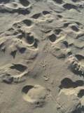 Dune de Pyla (91)