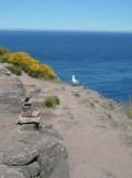 De Cap Fréhel à Fort La Latte (103)