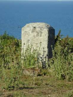 De Cap Fréhel à Fort La Latte (455)