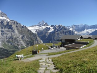 grindelwald-first-230