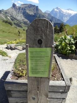 wilderswil-schynige-platte-188