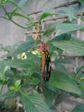 la-serre-aux-papillons-10