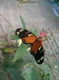 la-serre-aux-papillons-11