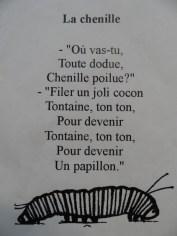 la-serre-aux-papillons-111