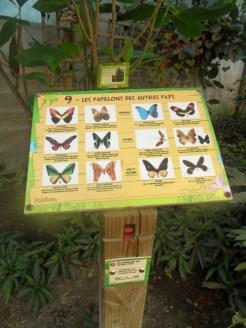 la-serre-aux-papillons-13