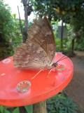 la-serre-aux-papillons-16