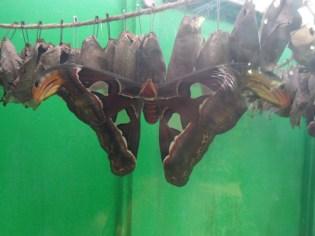 la-serre-aux-papillons-32