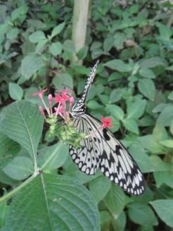 la-serre-aux-papillons-39