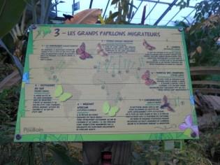 la-serre-aux-papillons-68