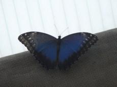 la-serre-aux-papillons-74