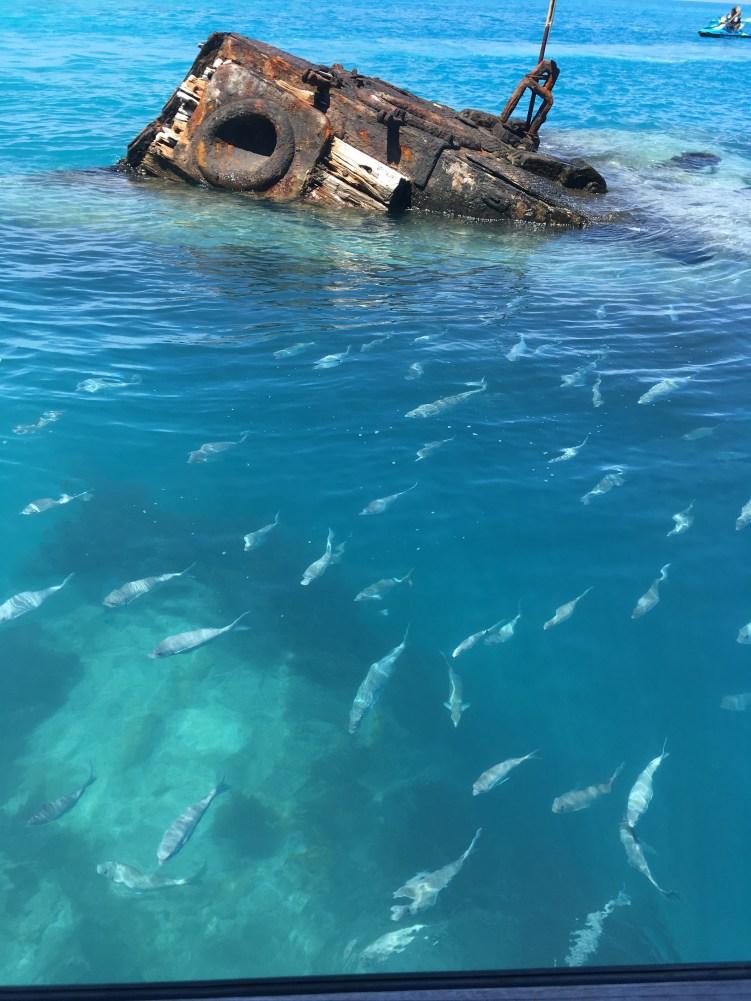 Glass Bottom Boat and Snorkelling Trip - Shipwrek