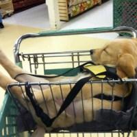 - çà m'épuise, les courses ; mais je tiens à choisir MES croquettes...-