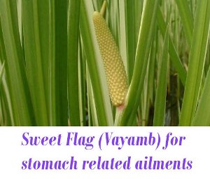 Vayamb uses