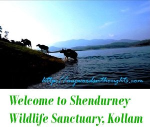 Shendurney Wildlife Sanctuary, Kollam
