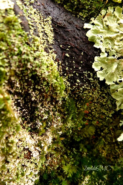 Moss, lichen, root bark, and everything else in between