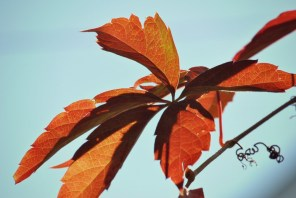 Autumn Leaves5