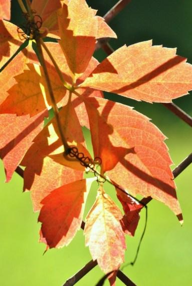 Autumn Leaves6