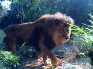 The silent lion that sneaked up on us