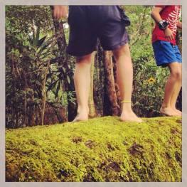 Rock Pools Boys on Mossy Log Dancing