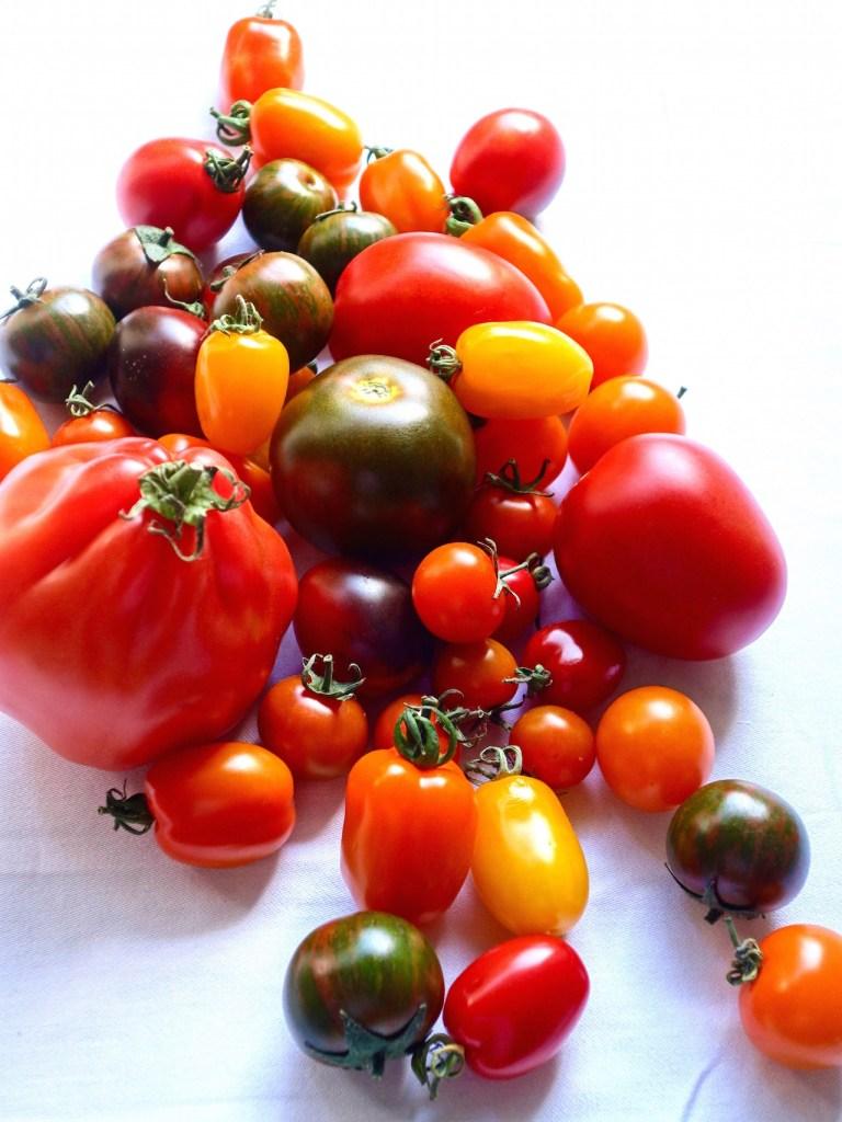 Tomaten, kanarische Tomaten, Tomatenvielfalt, Ochsenherz, Paradeiser