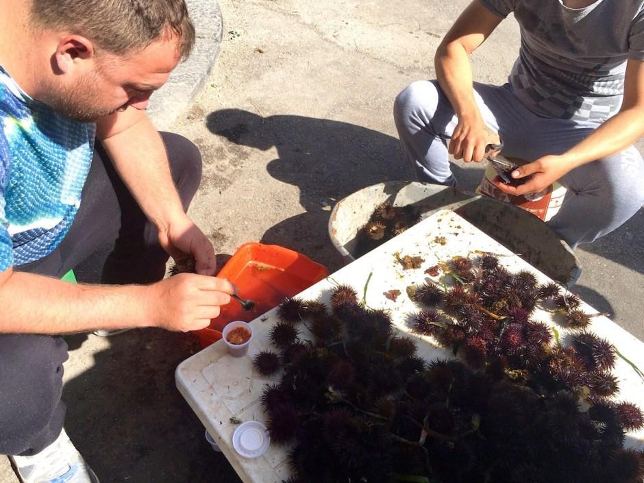 "Seeigelfischer in Sizilien lösen den ""Corail"""