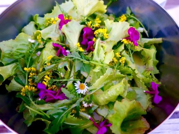 Herzhafter Salat mit Gänseblümchen, Raukeblüten und Phlox (2)